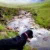 Skye Faeries Drowned My Labrador (nearly)
