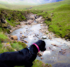 Skye Faeries Drowned My Labrador (nearly)